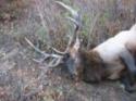 Elk_Hunting_006_150x125_.jpg