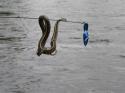 Snake_on_too_.JPG