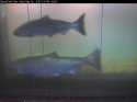 fishimage2.jpg