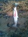 noharmedfish.jpg