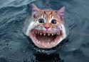 sea_kitten.jpg