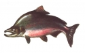 1477pink_salmon_jpg.jpg