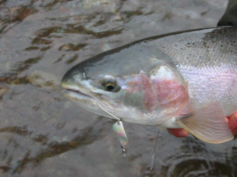 Spoon spinners for Steelhead fishing lures